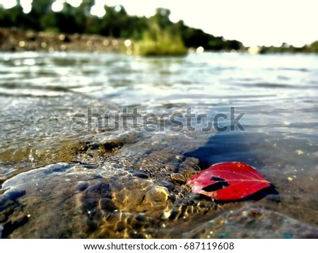 red leaf in water #687119608