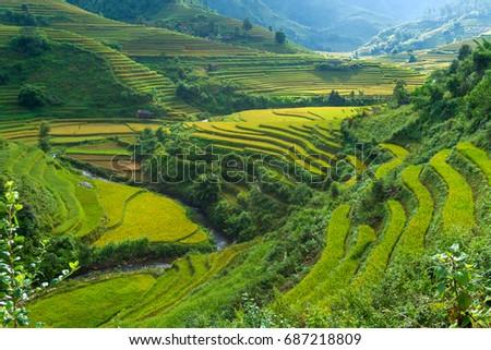 Beautiful rice on terraced in rainny season at Mu Cang Chai, Yen Bai, during trip HANOI to SAPA  Northwest Vietnam