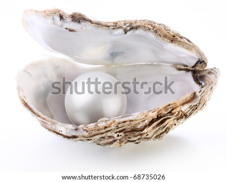 White pearl in a shell on a white background.