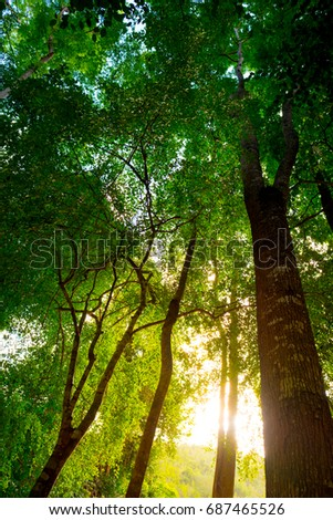 Beautiful trees. nature green wood, sunlight backgrounds.Green leaves tropical background , Natural concept. #687465526