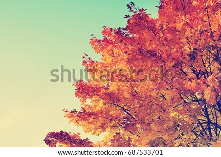 Autumn landscape/ Fall scene in the park with falling leaves