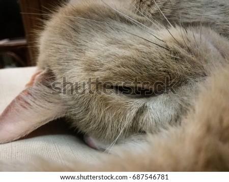 Mischievous home cat smiling #687546781