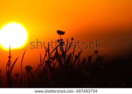 Single flower silhouette against beautiful sunset and bright sun.