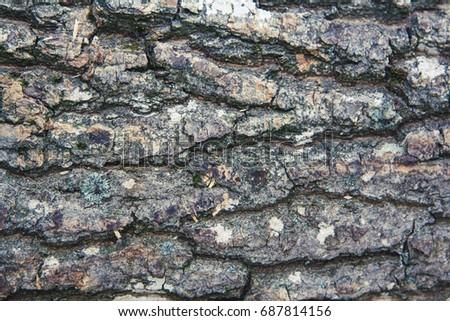 Wood texture. Bark of tree #687814156