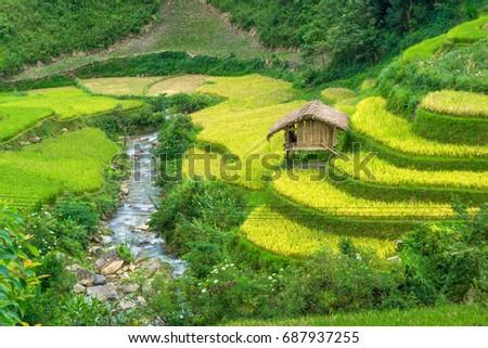 Beautiful rice paddy agriculture field during trip HANOI to SAPA at Mu Cang Chai, Yen Bai at Northwest Vietnam.