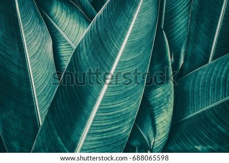 tropical leaf texture, dark green foliage nature background #688065598