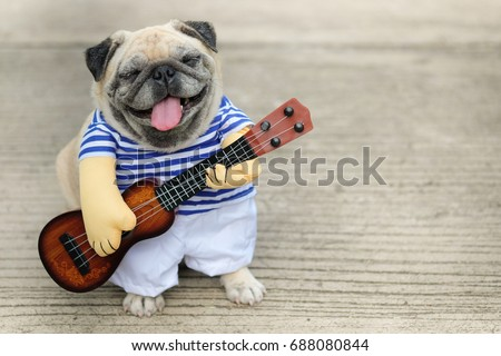 Indy Musician Guitarist pug dog.(Funny pug dog wearing indy musician costume with Ukulele.) Royalty-Free Stock Photo #688080844