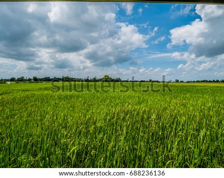 Beautiful refreshing blue sky cloud cloudy landscape background and empty field fill with yellow rice field in the afternoon sunlight. Upcountry landscape. #688236136