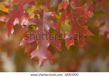 oak leaves #6883000