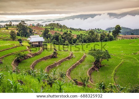 Terrace rice field over the mountain range, Pa Bong Piang village, Mae Chaem, Chiang mai, Thailand. #688325932