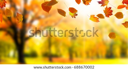 blurred autumnal landscape with leaf fall - autumn background #688670002