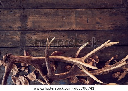 Composition of deer antlers with dry leaves against wooden background