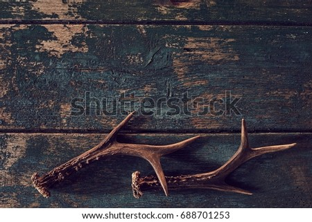 Shed antlers for a buck or deer on vintage weathered dark grungy wood with copy space in a hunting or nature concept
