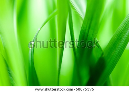 Green blades with drop of water #68875396