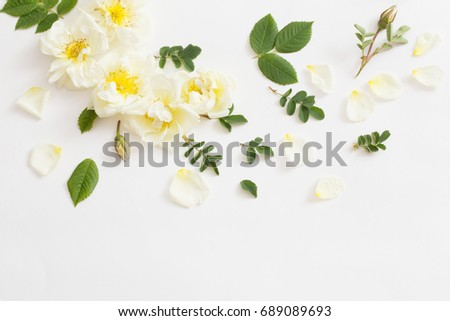 roses on white background #689089693