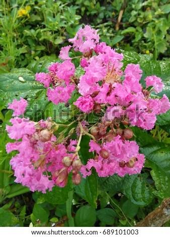 beautiful flower in my park #689101003