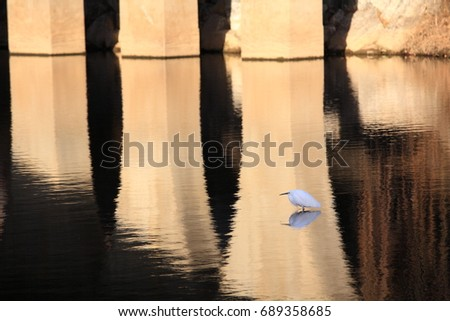 A relaxing white heron with reflection of bridge on the stream #689358685