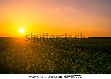 nice sunset #689457772