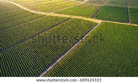 Beautiful vineyard field from top. #689624101