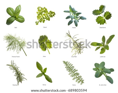 Herb leaves close up #689803594