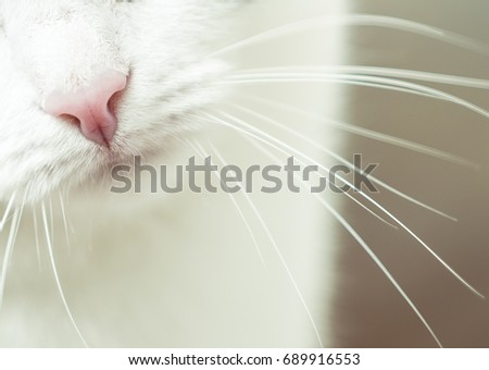 Nose and mouth of a cat, close-up. Kitty pink nose closeup showing whiskers and chin. Nose of cat closeup. Feline nose macro. A cat's muzzle. Tabby Feline close up photo. Cute kitten noses closeup. #689916553