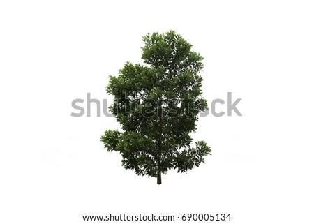 Isolate tree on white background #690005134