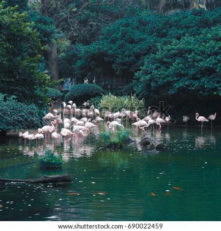 Wild Pink Flamingo, Hongkong #690022459