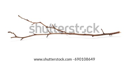 Dry branch isolated on white background Royalty-Free Stock Photo #690108649