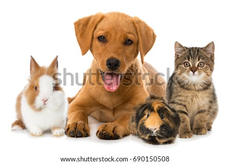 Group of pets Royalty-Free Stock Photo #690150508