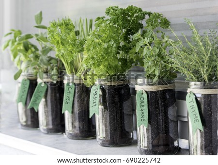 different herbs (basil, sage, chives, parsley, oregano and thyme) growing in mason jars on a window Royalty-Free Stock Photo #690225742