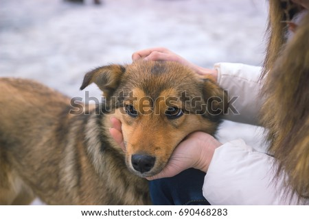 young woman consoles upset dog as they share a quiet moment of understanding #690468283