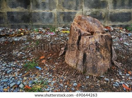 Tree stump on gravel floor #690644263