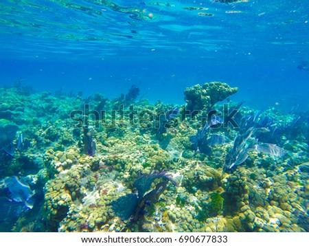 Key West Snorkelling in the Florida Keys Marine Sanctuary #690677833