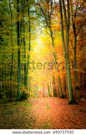 Amazing autumn in the forest in Poland #690737920