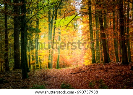Wonderful forest in the autumn in Europe #690737938