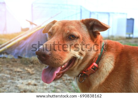 Head dog with sky and sun background #690838162