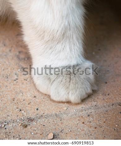 White cat foot #690919813