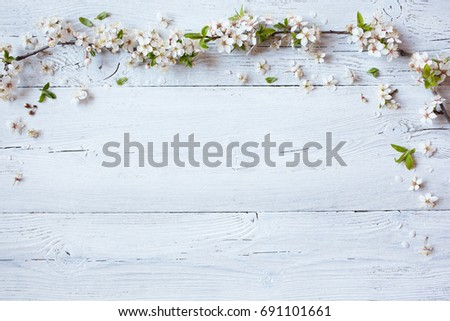 Background with flowering spring branches of plums, cherries