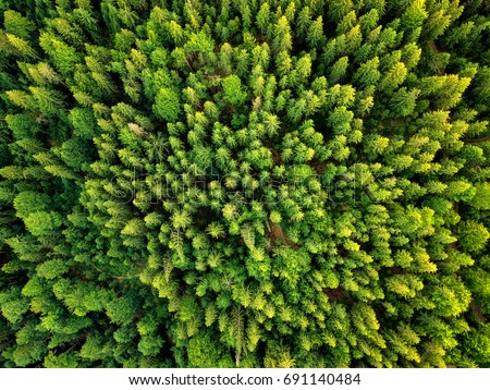 Summer warm sun light forest aerial view