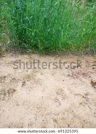 The grassy bush. Bright green. Sand. #691325395
