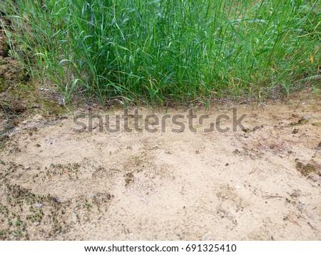 The grassy bush. Bright green. Sand. #691325410