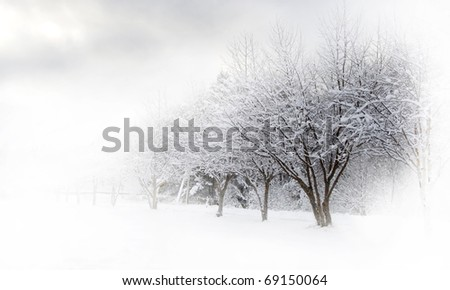 Winter alley beautiful