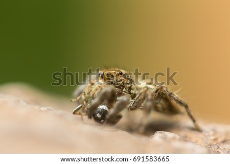 macro spider #691583665