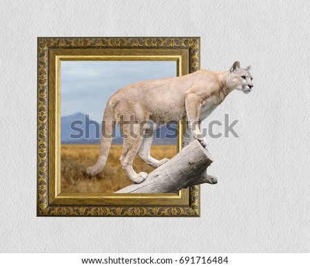 Puma in old wooden frame with 3d effect