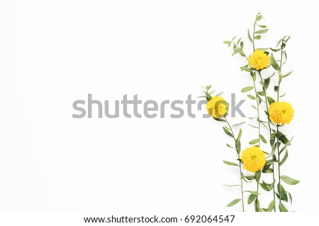 Creative arrangement with yellow flower and green leaves on white background. #692064547