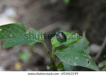 Lady Bug #692463199