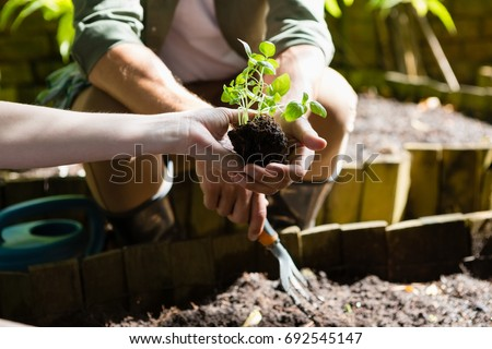 Mid section of couple planting young plant into the soil in garden #692545147