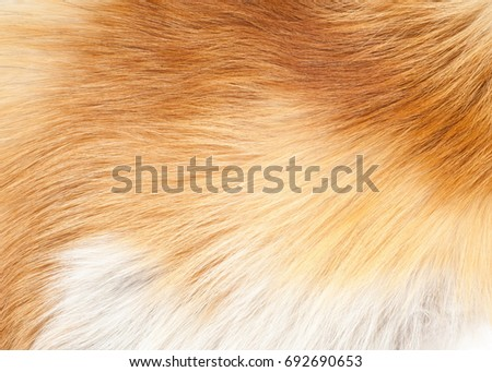 Textures red fox fur. Red fox shaggy fur texture cloth abstract, furry rusty texture plain surface, rough pelt background in horizontal orientation, nobody. #692690653