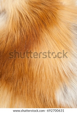 Textures red fox fur. Red fox shaggy fur texture cloth abstract, furry rusty texture plain surface, rough pelt background in horizontal orientation, nobody. #692700631