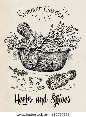 Beautiful hand drawing healthy herbs and spices mortar. Herbs, basil, chervil. #692737138